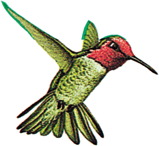 Googles Hummingbird Filter