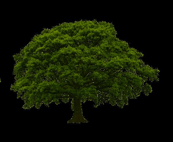 Bäume, Freunde des Menschen