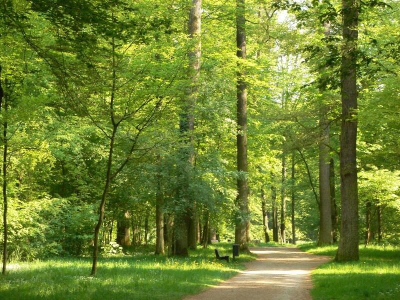 Der Wald ein Heilmittel für gestresste Menschen