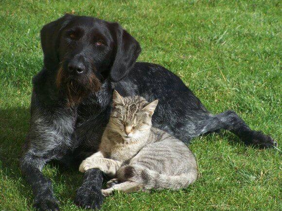 Hunde und Katzen in unserem Haus und ihr C02 Pfotenabdruck