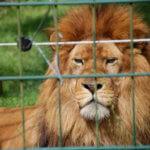 Tiere im Zoo hinter Gittern
