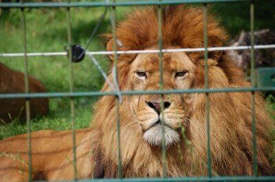 Gefangen: Tiere im Zoo