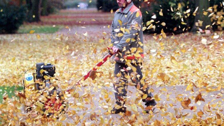 Das Herbstlaub und die Vorschriften