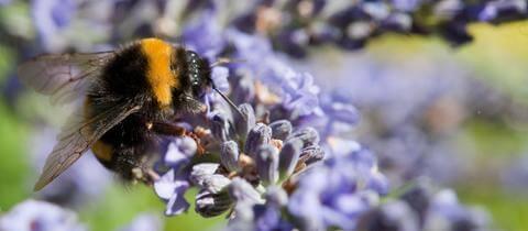 Das Insektensterben und Der stumme Frühling