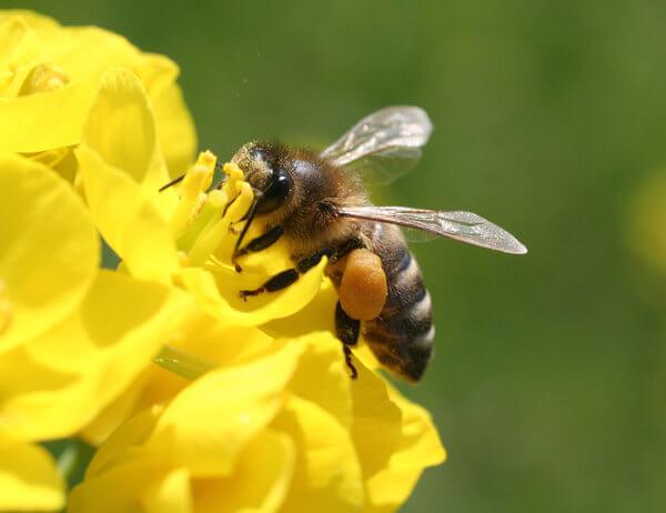 Hilfe für die Bienen